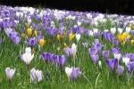 Bliža se pomlad in z njo alergije