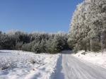 Avtomobili za snežne razmere